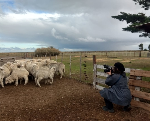 Markaware visit - filming sheep