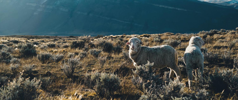 Fuhrmann Argentina Organic Wool