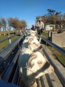 La Elvira Farm managed by Fuhrmann