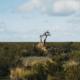 Grasslands in Patagonia