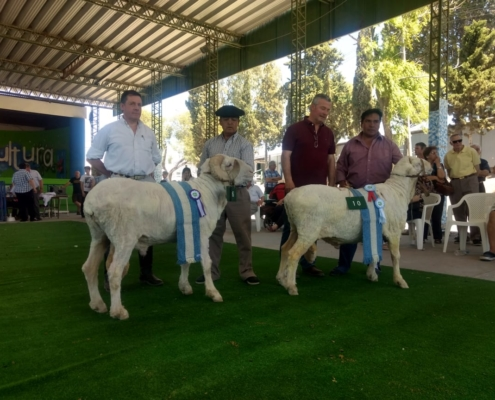 Merino Ram Show 2018 Trelew