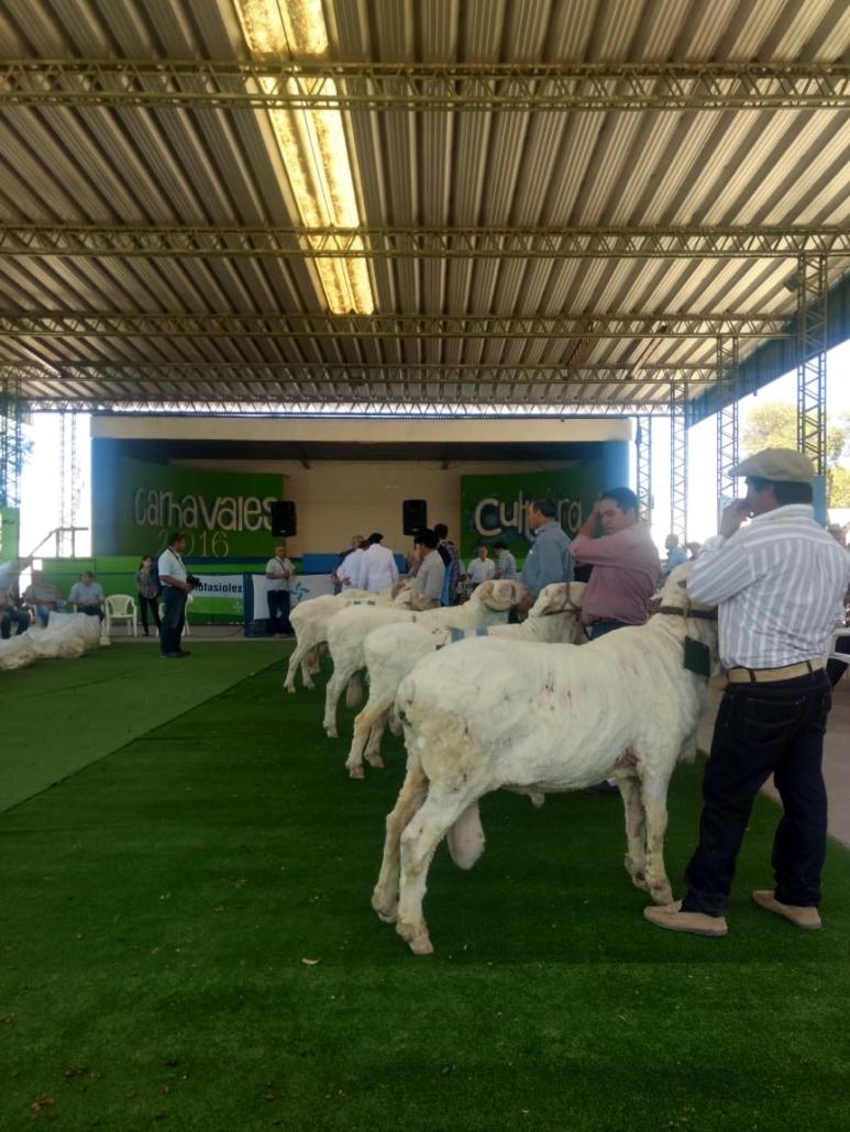 La Rural de Trelew 2018 - 6