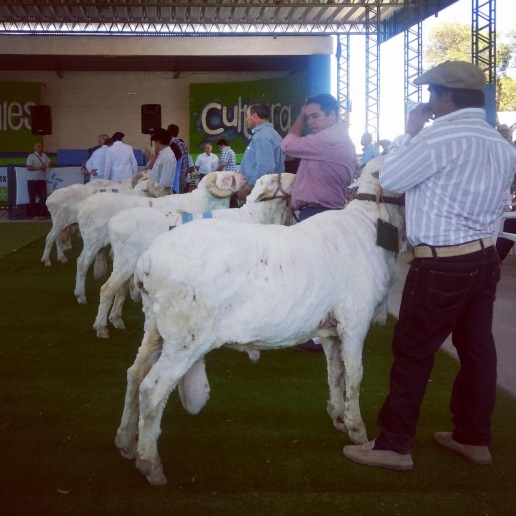 La Rural de Trelew 2018 - 5